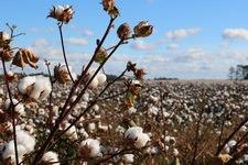 Biologisch katoen Better Cotton Initiative duurzaam katoen