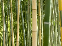 bamboe stengels